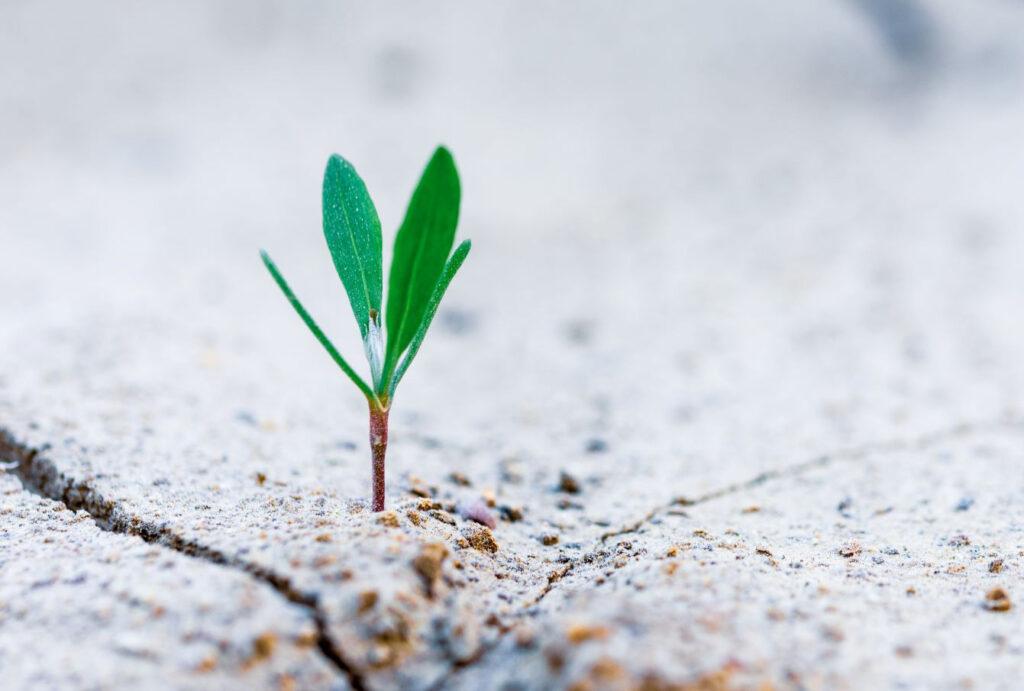 resilient circular Economy