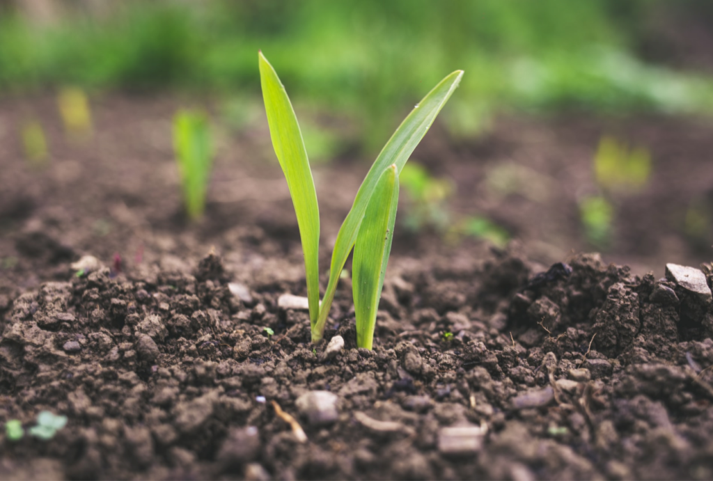 The 'Circular Economy' applied to agriculture